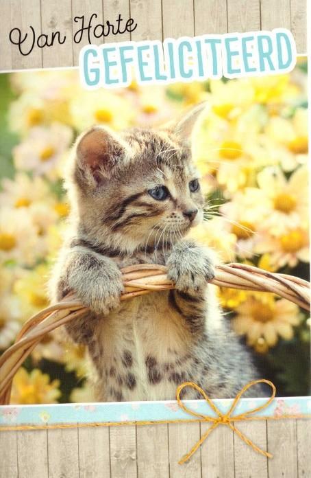 Felicitatiekaart met dieren